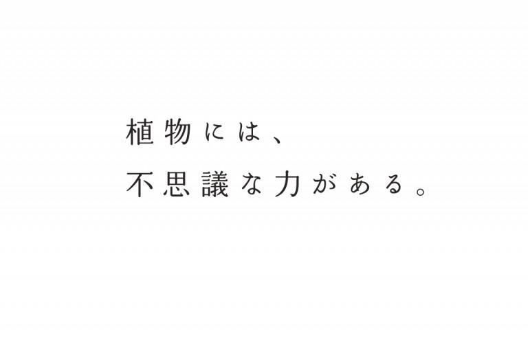 midori dayori